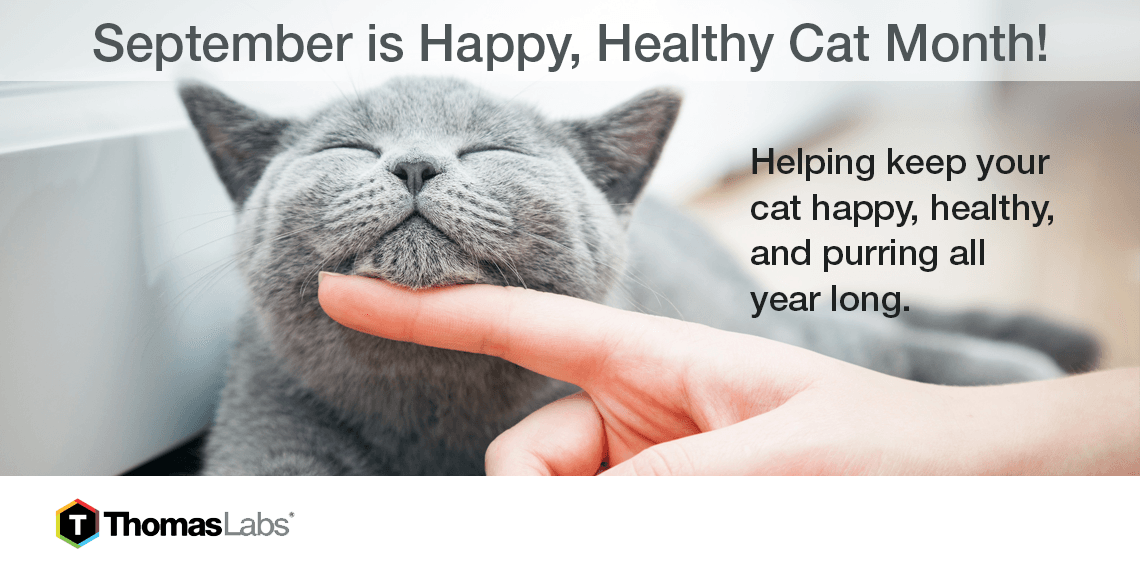 Happy, Healthy Cat Month