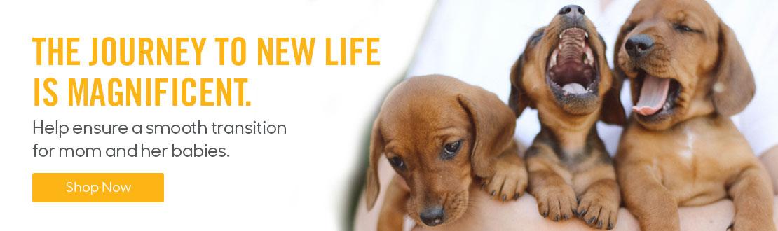 Dog Breeding Products