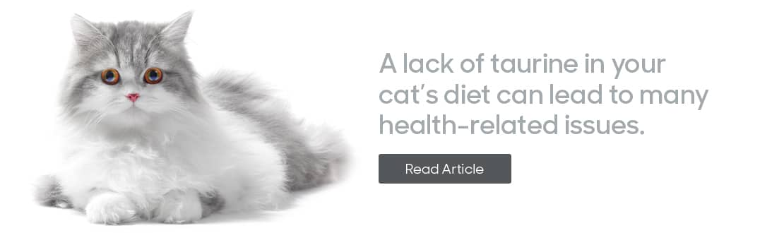 A lack of Taurine in your cat's diet can lead to many health issues.