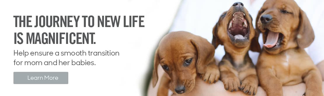 From dog breeding to pregnancy, whelping to lactation, the journey to new life can be stressful.