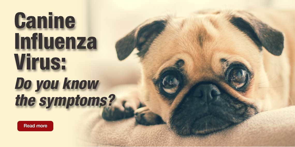 Help and information about canine influenza