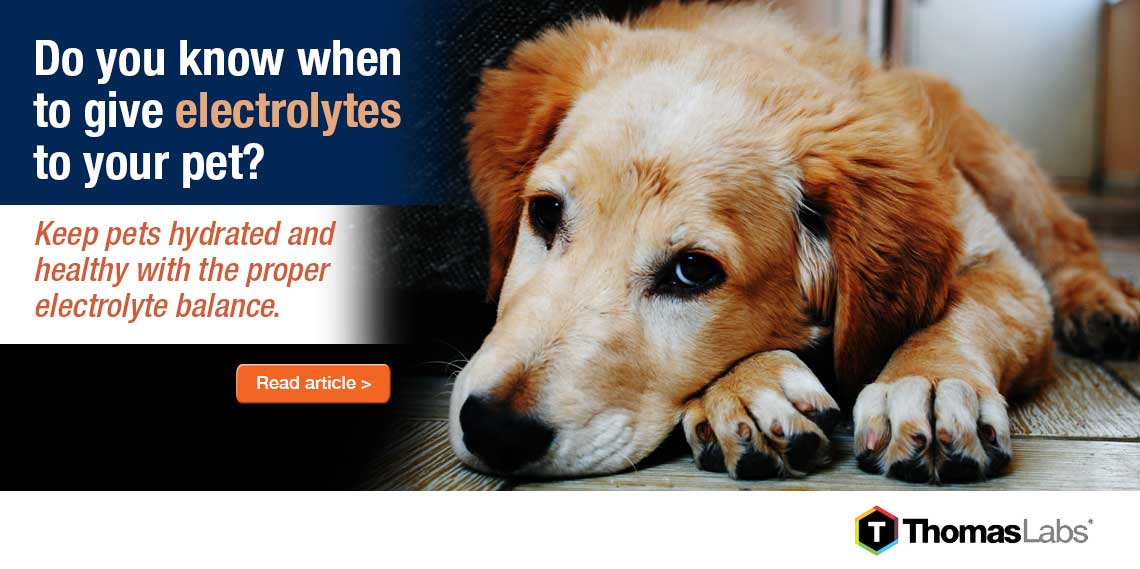 Electrolytes for Pets