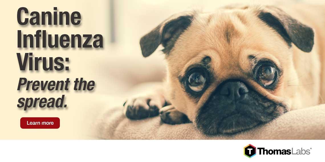 Dog Canine Influenza Information