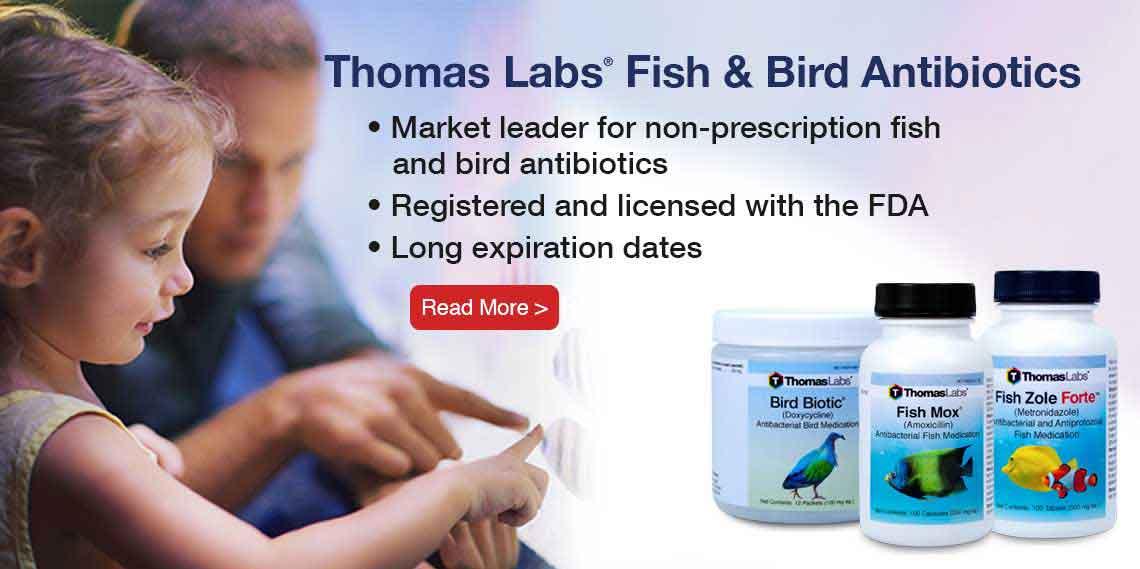 Thomas Labs Fish Antibiotics - Choose the right antibiotic