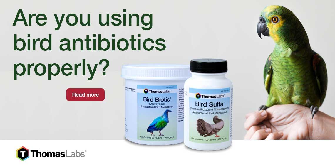 Bird Antibiotics How To