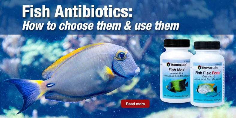 Thomas Labs Fish Antibiotics - Choose the right antibiotic