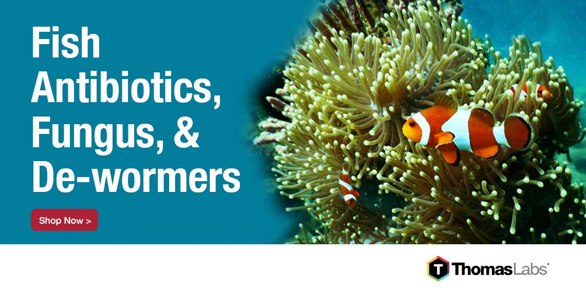 Best Selling Fish Antibiotics- Fish Mox, Fish Flex