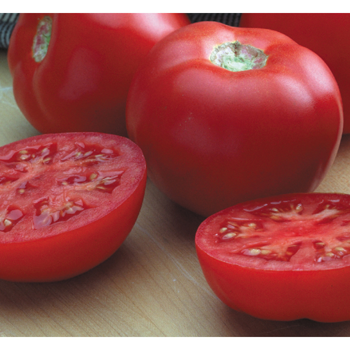 Goliath Italian Hybrid Tomato
