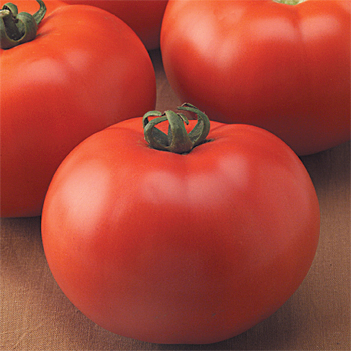 Goliath Old-Fashioned Hybrid Tomato