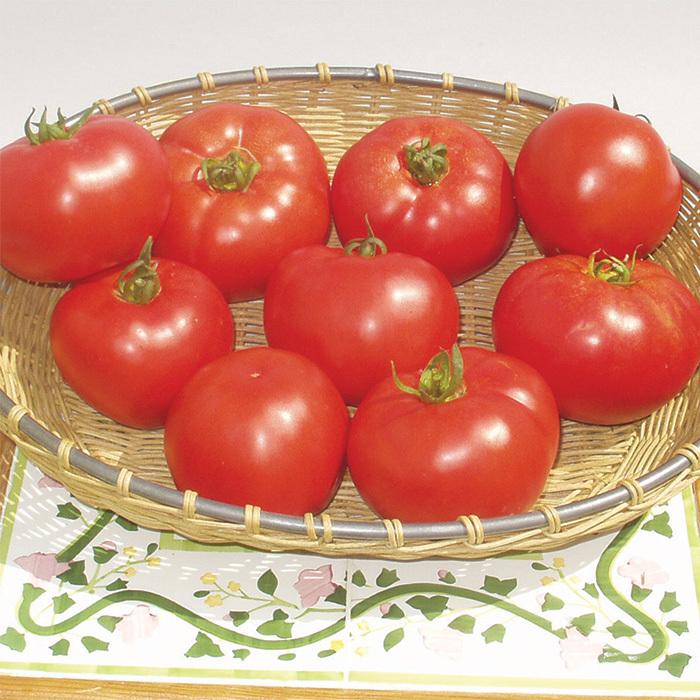 Amelia Hybrid Tomato