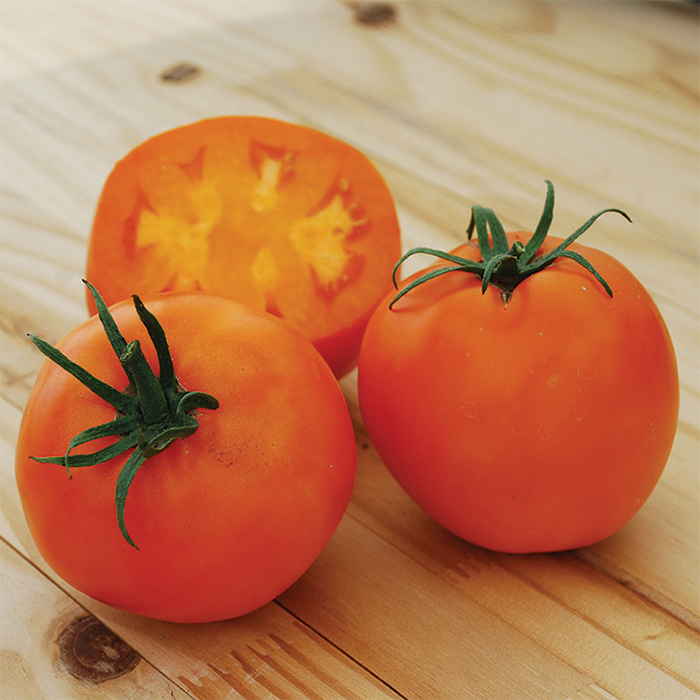 Amish Gold Slicer Tomato
