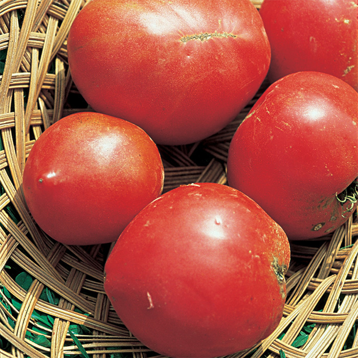 Anna Russian Tomato Seed