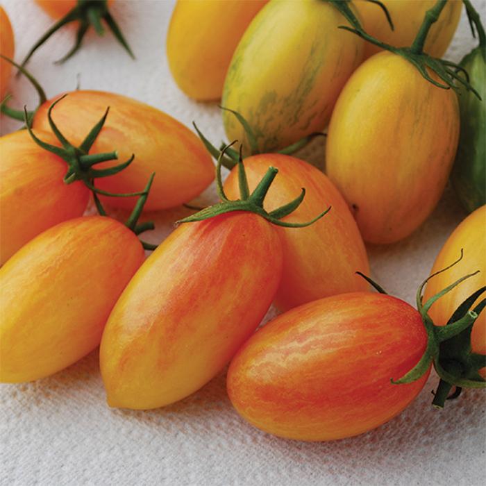 Artisan Tiger Blush Tomato
