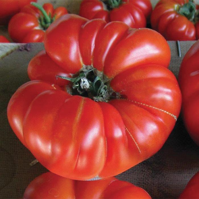 Buffalosteak Hybrid Vfnt Tomato