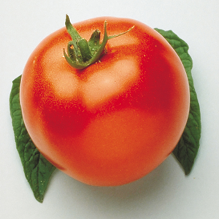 Campbell's 33 Tomato