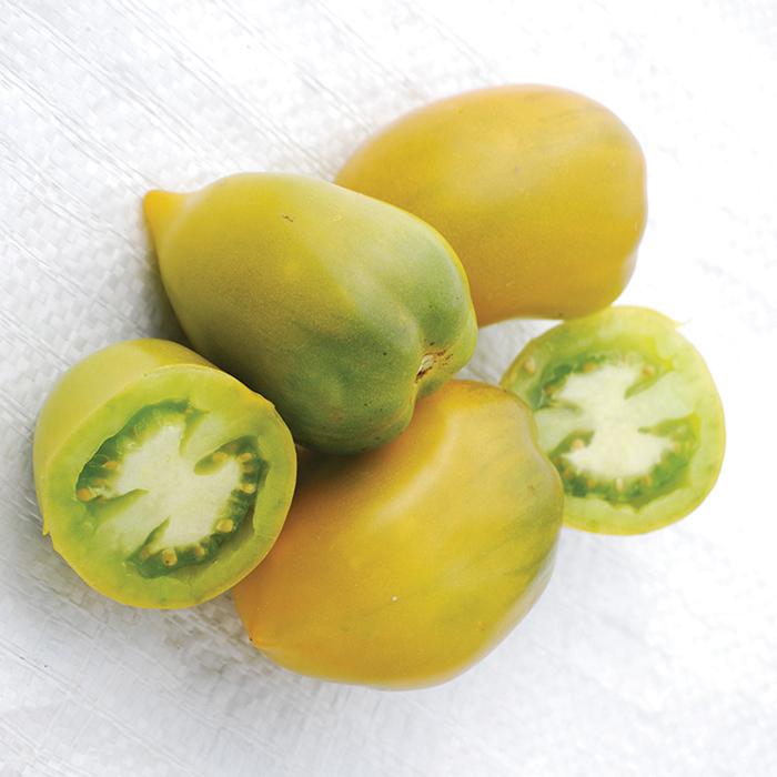 Chile Verde Tomato