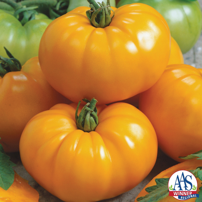 Chef's Choice Yellow Hybrid Tomato
