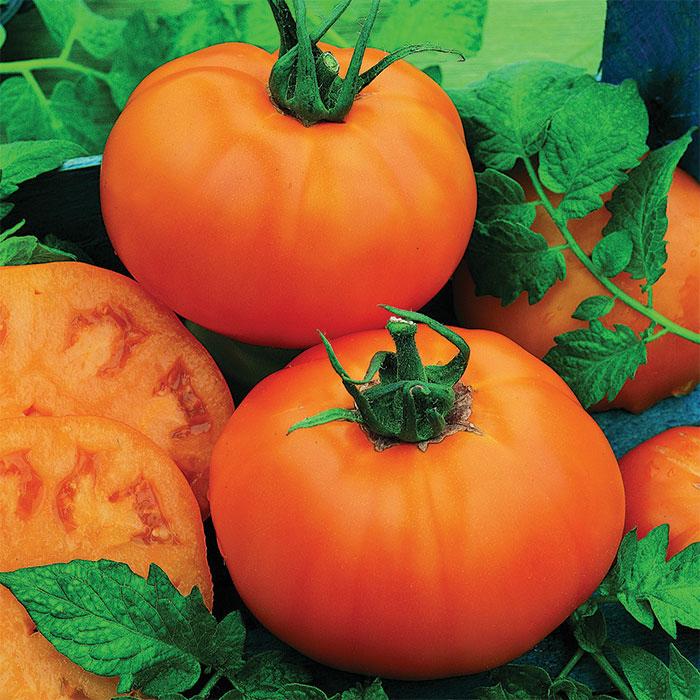 Chef's Choice Orange Hybrid Tomato