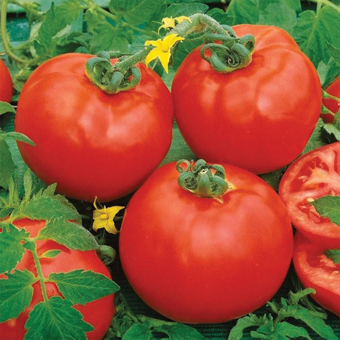 Containers Choice Red Hybrid Tomato
