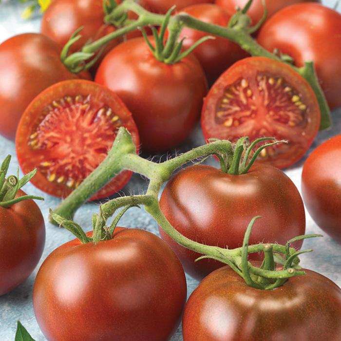 Early Choice Hybrid Tomato