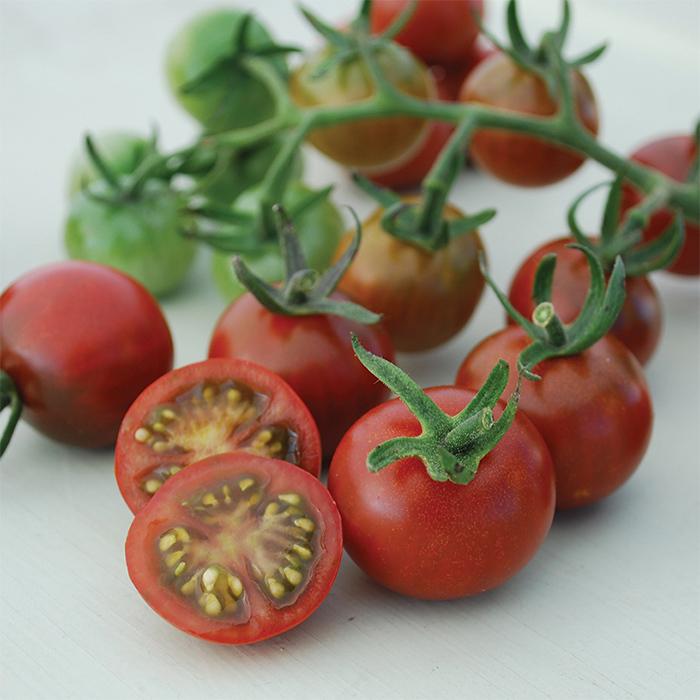 Garnet Tomato