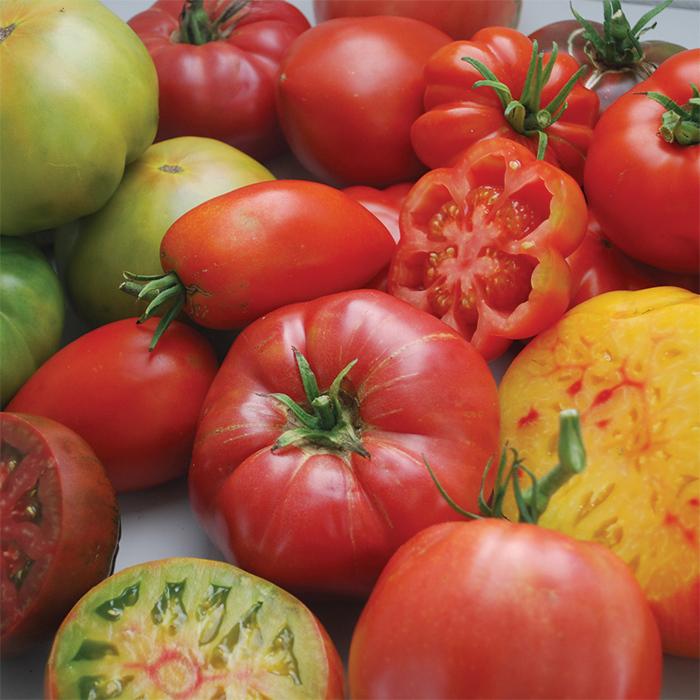 Gourmet Heirloom Blend Tomato