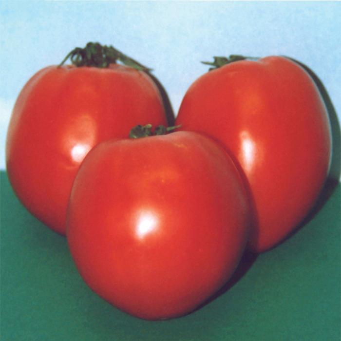 Hard Rock Tomato