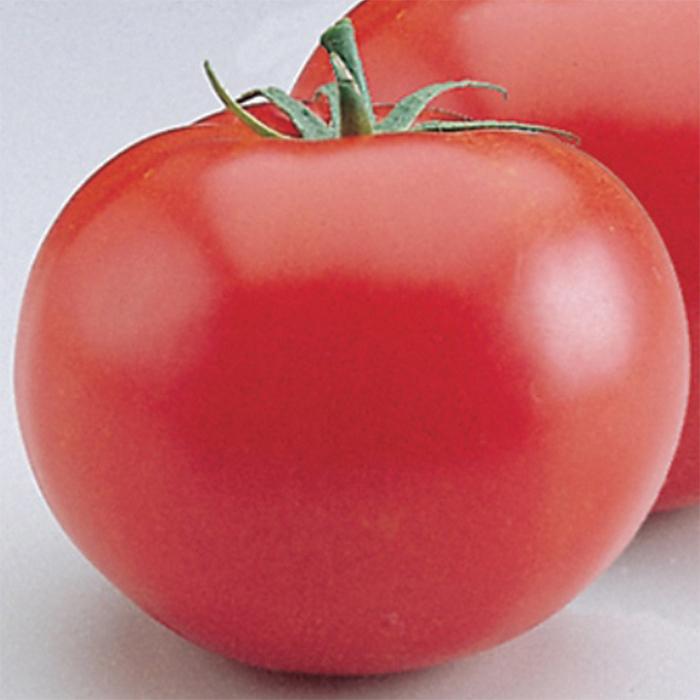 Heatmaster Hybrid Tomato
