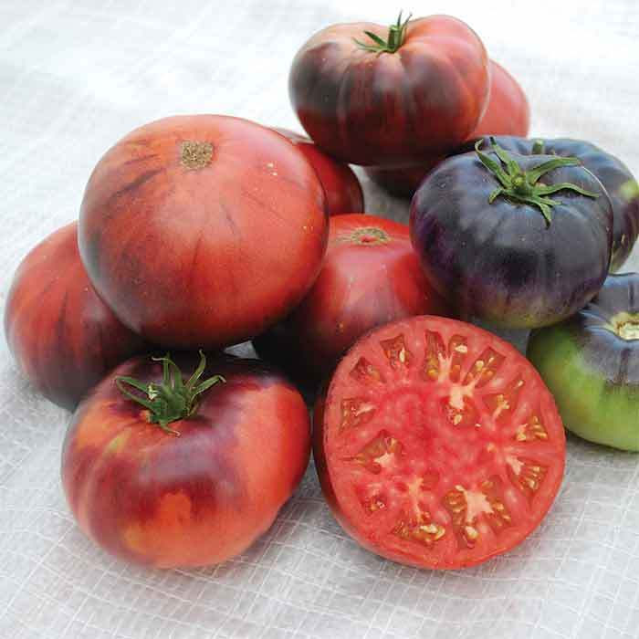 Indigo Blue Beauty Tomato