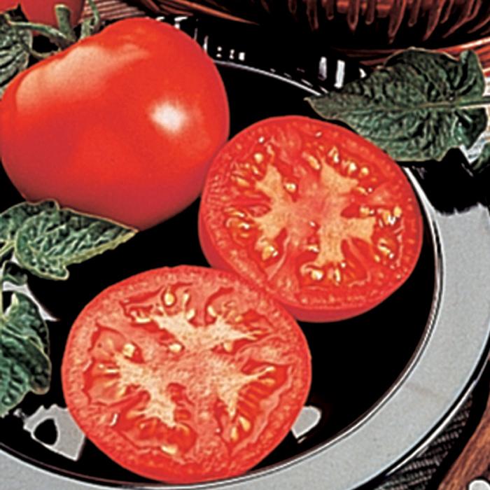 Husky Red Hybrid Tomato