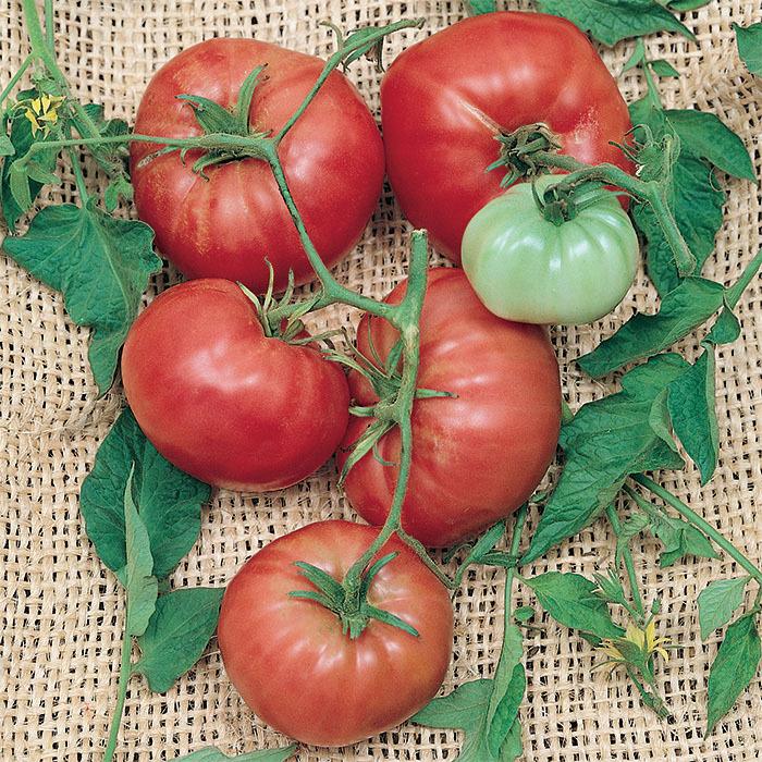 Climbing Trip-L-Crop Tomato