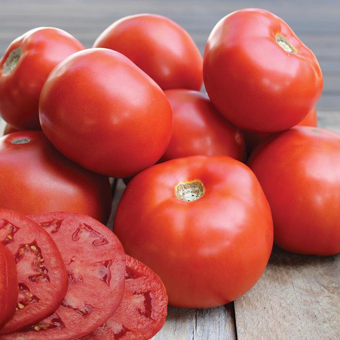 Jamestown Hybrid Tomato