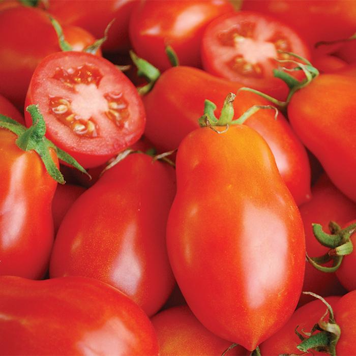 Martino's Roma Tomato