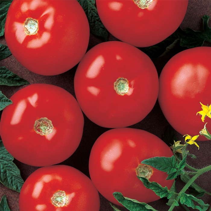 Mountain Fresh Plus Hybrid Tomato