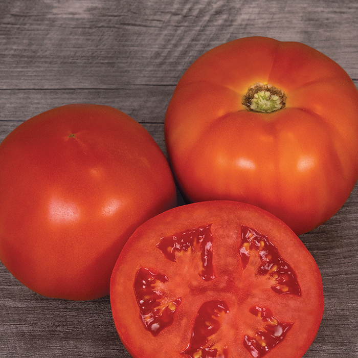Mountain Man Hybrid Tomato