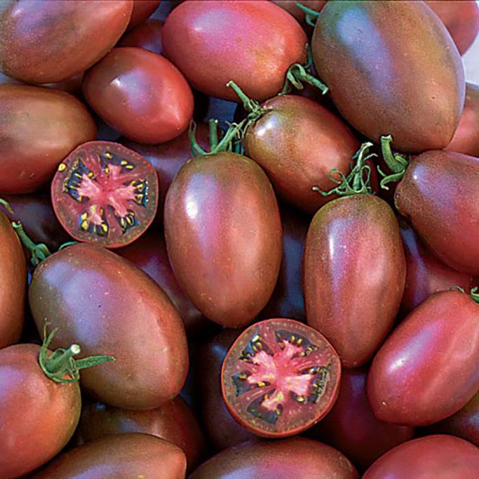 Purple Russian Tomato
