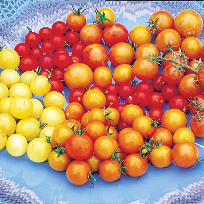 Rainbow Cherry Tomato Mix