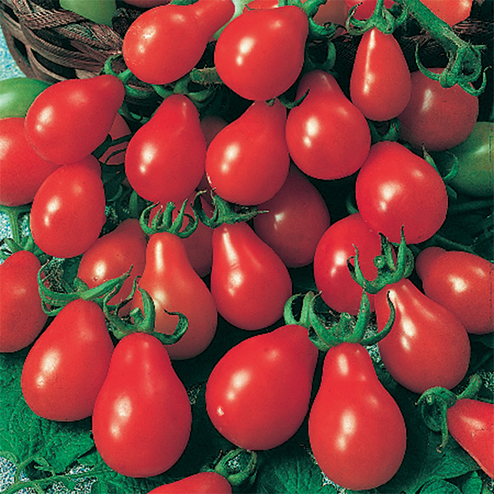 Red Pear Tomato