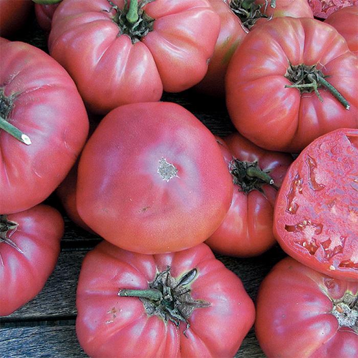 Rose Tomato