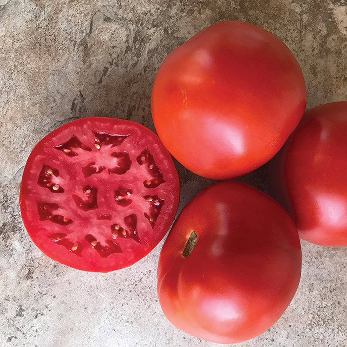 Roadster Hybrid Tomato