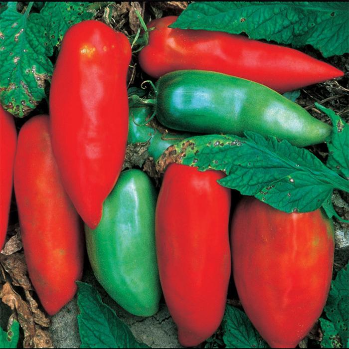 Sausage Tomato