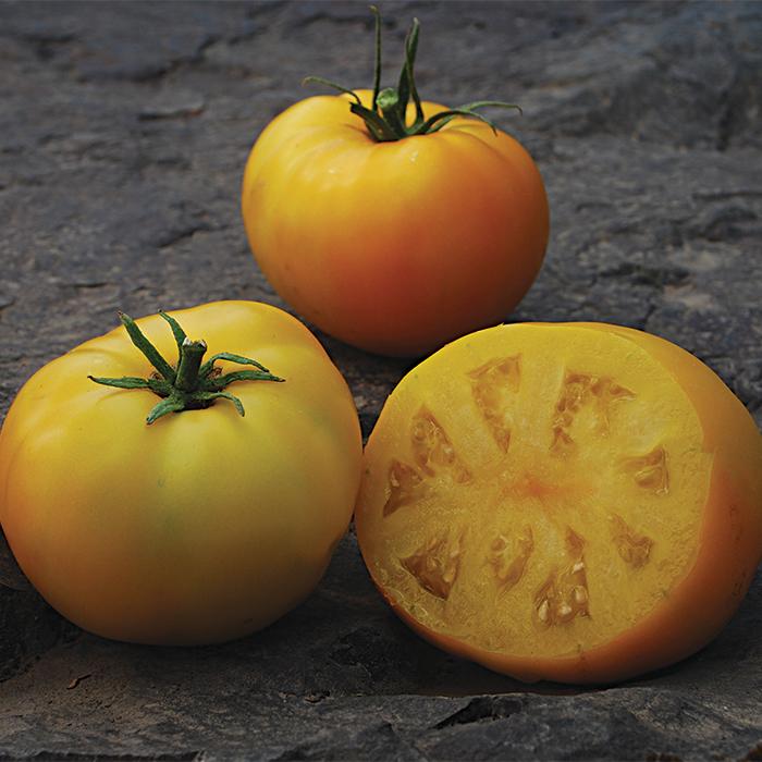 Sean's Yellow Tomato