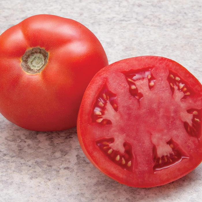 Simplicity Hybrid Tomato