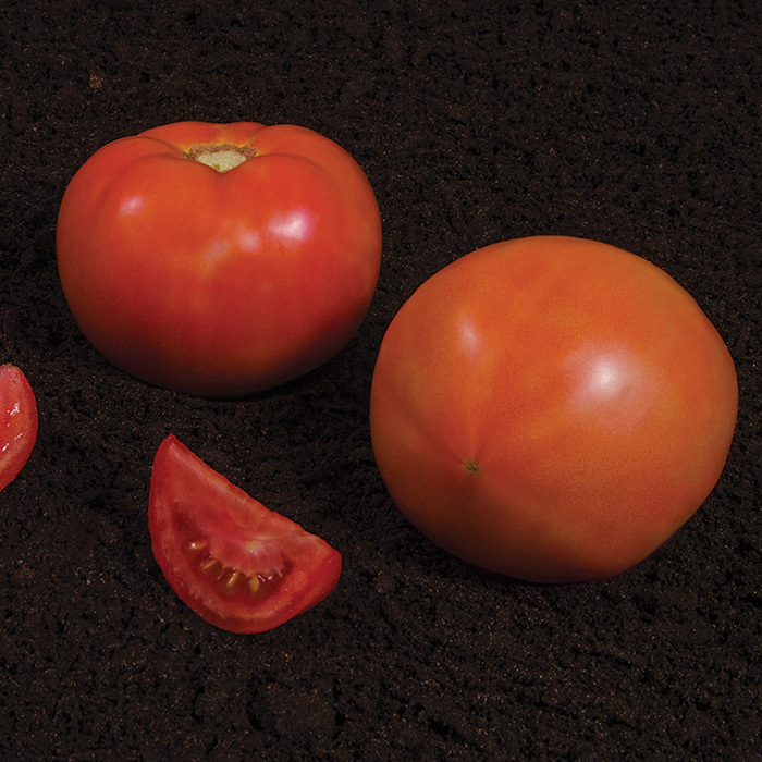 Summerpick Hybrid Tomato