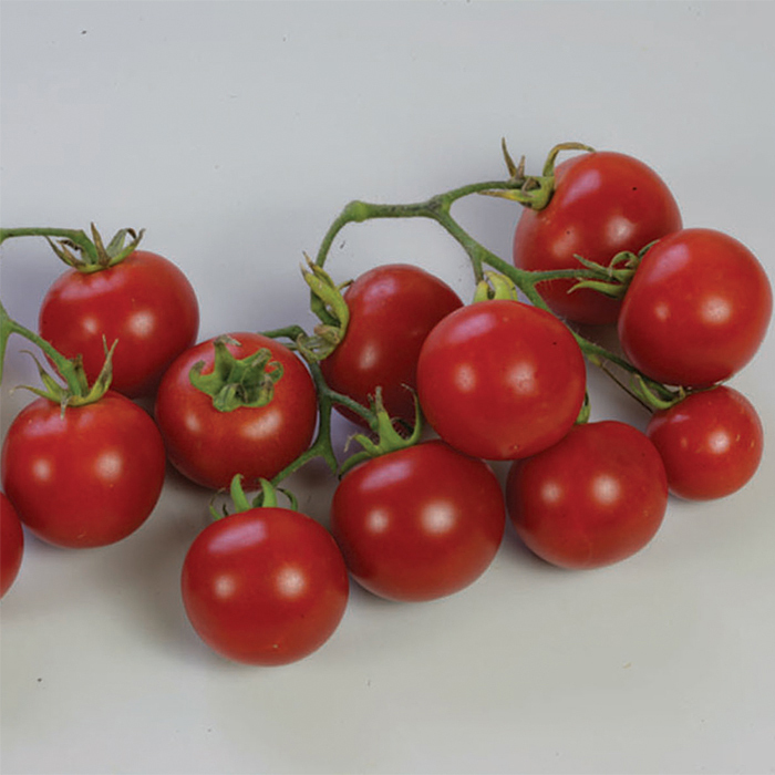 Sweet 'n' Neat Scarlet Improved Tomato