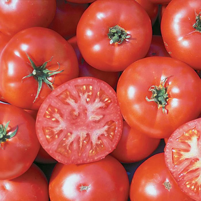 Trophy Tomato