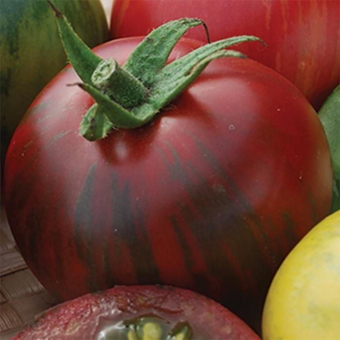 Vernissage Black Tomato