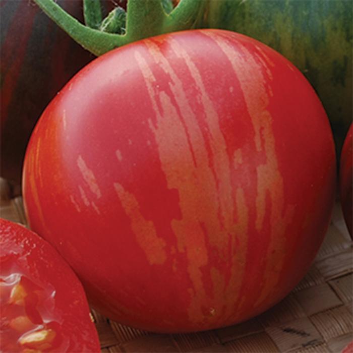 Vernissage Pink Tomato