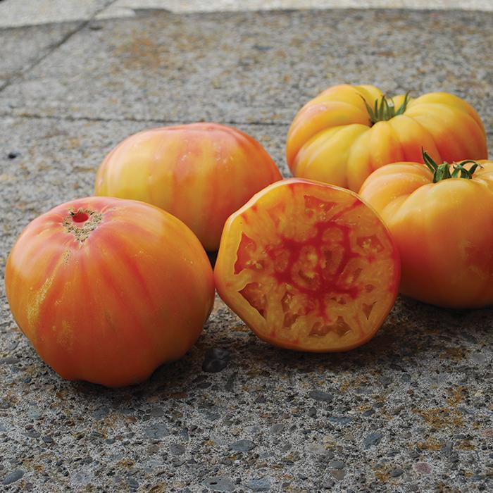 Virginia Sweets Tomato