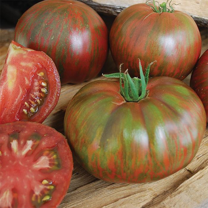 Wild Boar Pink Berkeley Tie Dye Tomato